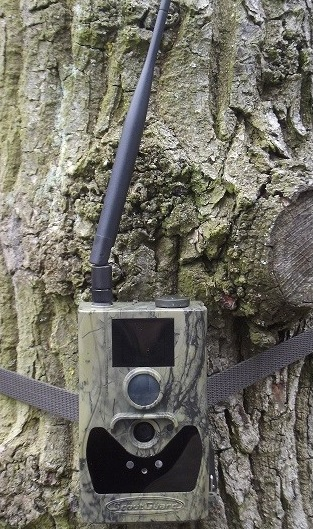 Купить беспроводную GSM видеокамеру ScoutGuard